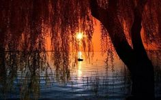 Gorgeous Autumn Colors on the Lake sunset autumn lake fall beauty colors sundown