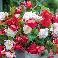 Fragrant Cascading Begonia Blend - they also come in pink. Would be nice to hang on the porch!