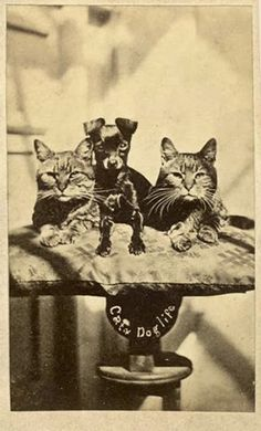 Vintage photographic portrait of two cats and a dog on a pedestal.