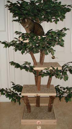KITTY Tree Deluxe with Topper Assembly Cat Tree by PetTreeHouses, $499.00                                                                                                                                                                                 Mehr