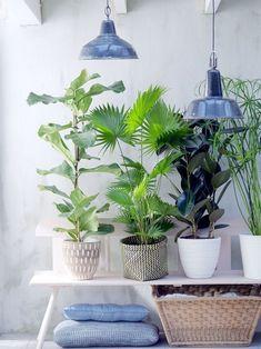 Huge plants in pots