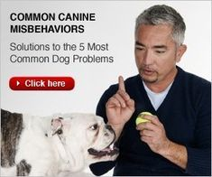 Cesar Millan's Best Tips to Stop Dog Barking | Dog Whisperer Cesar Millan #puppytrainingbitingcesarmillan