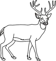Wood Burning Deer Coloring Pages 43 Ideas For 2019 Deer Coloring Pages, Detailed Coloring Pages, Adult Coloring Pages, Coloring Sheets, Pallet Picture Display, Deer Outline, Male Deer, Pallet Pictures, Deer Drawing