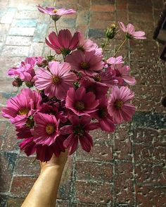 Cosmea, shall I add something? #slowflowers #countryretreat #rusticweddingchic #countrywedding #organicfarm #valdorcia #flowersofilrigo