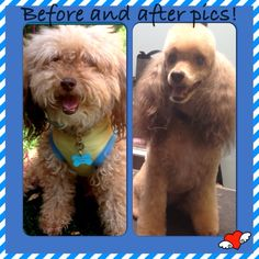 Before and after spring haircut.