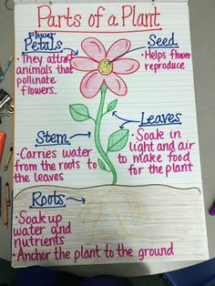 Check out these creative and easy ways to teach your students about growing a seed in the classroom. Science 17 Creative Ways to Teach Plant Life Cycle - WeAreTeachers 1st Grade Science, Kindergarten Science, Teaching Science, Science Activities, Sequencing Activities, Science Anchor Charts 5th Grade, Teaching Ideas, Kindergarten Anchor Charts, Science Crafts