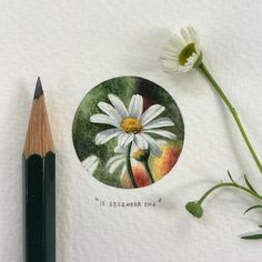 South African artist Lorraine Loots has been composing stunning miniature watercolor paintings since January No larger than the size of a small coin, to produce her highly intricate micro-paintings, Loots only uses her paint brush and naked eye. Cool Art Drawings, Realistic Drawings, Art Drawings Sketches, Pencil Drawings, Colorful Drawings, Colored Pencil Artwork, Color Pencil Art, Circle Art, Mini Paintings
