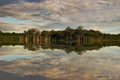 31 Mind Blowing Photographs of Amazon Forest