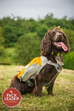 Our Sid all kitted out for an adventure with the Ruffwear Singletrack backpack. This comes with two water bladders so you can rehydrate on the go   http://www.packleaderdogadventures.co.uk/collections/ruffwear/products/ruffwear-singletrak-pack