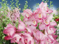 BANCO DE IMAGENES GRATIS: Nuevos paisajes con flores para decorar y compartir...