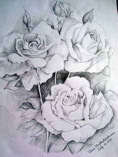 flower drawings | Thanks to GRAPHITE PENCIL DRAWINGS BY SUZANNE SCHAEFER