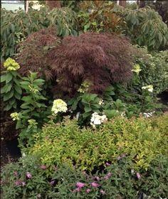 Display in our shade area. Shades, Display, Vegetables, Garden, Plants, Floor Space, Garten, Billboard, Lawn And Garden
