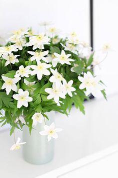 Além de lindas, as flores e plantas trazem boas energias para o seu lar. No blog indicamos 5 plantinhas para dar aquele up no astral da sua casa e deixá-la mais verde.