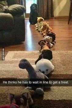 He thinks he has to wait in line to get a treat. from BuzzyifySpace