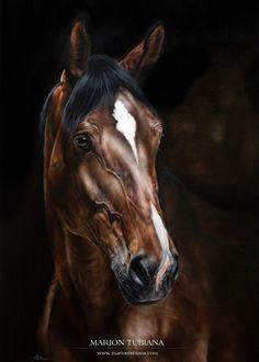 Magnifiques pastels de Marion Tubiana (FR). Pastels animaliers et équins, peintures et photographie.