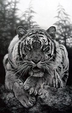 Realistic Animal Pencil Drawings (19)