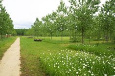The Natural Park Of Pelissier by Atelier ARCADIE - Nave - Cassa espansione - Natural meadow - natural park