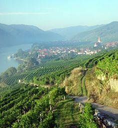 Austrian Wine - A Taste of Culture