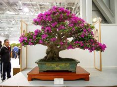Bonsai – Galerias de fotos | Aido Bonsa #bonsai – Galerias de fotos | Aido Bonsai