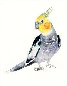 COCKATIEL by DIMDI Original watercolor painting 8x10inch by dimdi
