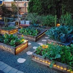 The Top Mistakes Of My Beginner Gardener Experience And How You Can Avoid Them T. - Hinterhof Landschaftsbau Ideen - The Top Mistakes Of My Beginner Gardener Experience And How You Can Avoid Them T. Backyard Vegetable Gardens, Potager Garden, Vegetable Garden Design, Outdoor Gardens, Herb Garden, Vegetables Garden, Veggies, Design Jardin, Plantation