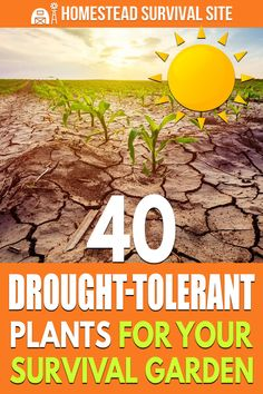 A vast array of vegetable and herb plants can survive drought conditions and still generate a robust harvest from the survival garden. Homestead Survival, Survival Tips, Survival Skills, Survival Stuff, Vegetable Garden Planning, Vegetable Gardening, Best Egg Laying Chickens, Drought Tolerant Plants, Herb Plants