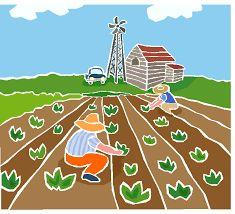 Plaguicidas y abonos orgánicos: Plantas con acción insecticida que protegen el suelo y garantizan alimentación sana