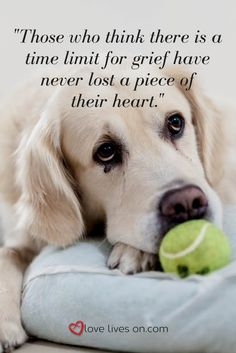 44 Best Loss Of A Pet Quotes Images In 2019 Animal Quotes Animal