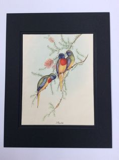 Exotic Tropical Bird Illustration by John Gould by MayIQuoteYou John Gould, Upstairs Bathrooms, Tropical Birds, Bird Illustration, Exotic, Decorating, Book, Creative, Prints