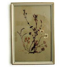 Vintage 1960s Pressed Flowers of Scotland Framed Picture Signed Wild Orkney Botanical Specimen