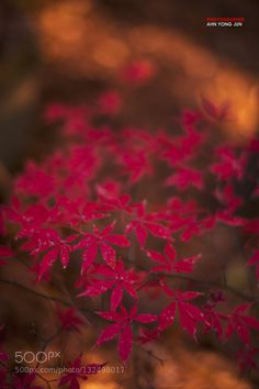 Last redness in this season by YzooN. @go4fotos