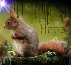 Eichhörnchen, Grafikdesign, Wandbild,Plakat, Hope Web Banner, Flyer, Grafik Design, Portrait, Animals, Inspiration, Pictures, Wall Prints, Poster