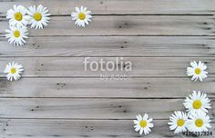 Wild daisies on wood background