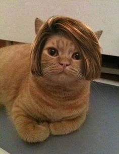 Do you like my new hairdo?