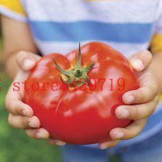 200 шт. большой говядины гибридный семена помидоров гигантский томата-фрукты и семена плодов для дома сад бесплатно без гмо купить-пу прямая - от - китай