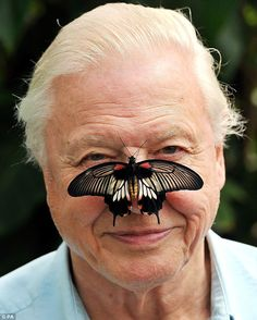 I would love to meet Sir David Attenborough. Just to shake his hand. He's just a phenomenal person. David Attenborough, Leila, Love Fest, Love To Meet, Tv Presenters, Natural World, Make Me Smile, Famous People, Documentaries