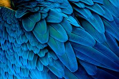 texturas de plumas - Buscar con Google