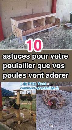 10 Astuces Pour Votre Poulailler Que Vos Poules Vont Adorer !