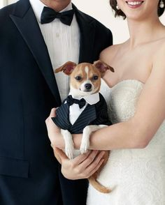 It's not unusual these days for the bridal party to include a best friend who is more apt to wag a tail rather than hold a bouquet when standing beside the soon-to-be newlyweds.  Available at @petsmartcorp  stores nationwide and online, the #MarthaStewartPets wedding collection is certain to add a dose of puppy love to any celebration.