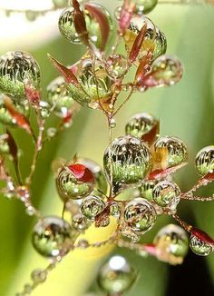 beauty in the tiniest drops