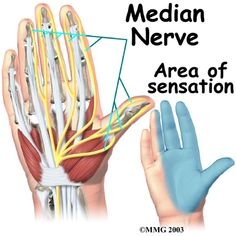 wrist anatomy showing median nerve