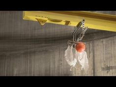 Watch a Feather and Bowling Ball Fall At the Same Speed - http://blogs.discovermagazine.com/d-brief/2014/11/06/watch-feather-bowling-ball-fall-speed/