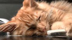 cinemagraph cat