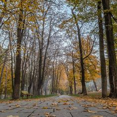 #naturecolors #nature #naturel #autumn 🍂#autumn🍁 #autummcolors #colors #color_of_day #colors_ofourlives #sky #bluesky #trees #hdr #hdr_professional #hdr_of_our_world  #hdr_lovers #dslr #dslrphotography #romania ##orastie