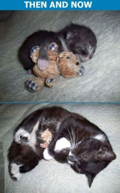 Adorable kitty - now & then - This is just too cute and reminds me of how quickly all of our babies grow up. What a cute photo idea to have a small toy in each picture as they get older.