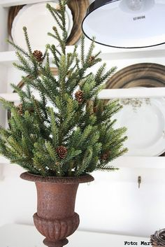 WSH loves the idea of small Christmas tree in a rusty urn.