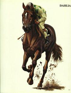Dahlia, English Thoroughbred Race Horse. artist Piero Cozzaglio 1984 print | #1875836915