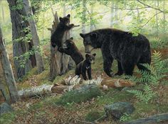 """Black Bear Paintings Prints 