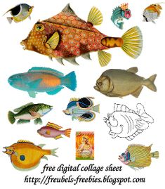 Fish Collage, Collage Book, Collage Sheet, Bullet Journal Art, Art Journal Pages, Art Journals, Junk Journal, Collages, Magazine Collage