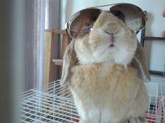 cool bunbun. #bunnies #fashions